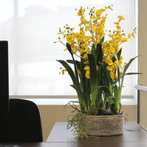 Artificial-Dancing-Orchid-on-office-desk.jpg
